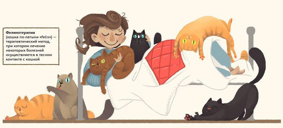 6 котов на кровати с мальчиком
