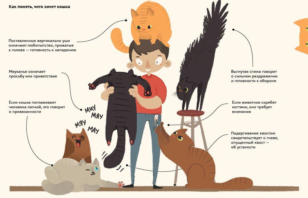 Различное поведение котов с человеком