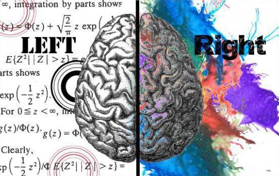 два полушария мозга, правое и левое