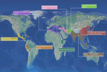 карта мира с обозначением центорв происхождения культурных растений
