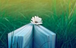 раскрытая книга на лугу с ромашкой