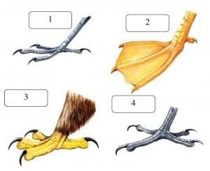 Изображения ног птиц