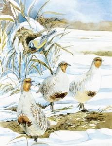 Иллюстрация из книги В. Бианки