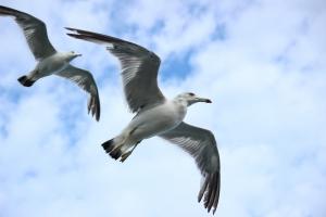Летят чайки.