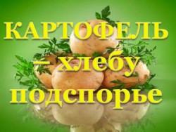 картофель - хлебу подспорье