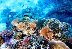 Фотография подводного мира Большого Барьерного рифа