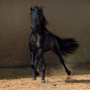 конь скачет галопом