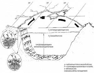 Анаэробные бактерии в экосистеме Чёрного моря