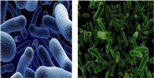 Фотография анаэробных бактерий в Чёрном море