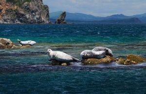 Фотография ларги, обитающие в Дальневосточном морском заповеднике