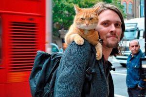 Кот Боб на плече своего хозяина Д. Боуэна