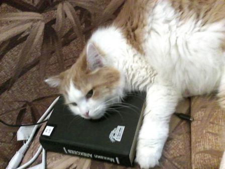Кот Яшка.