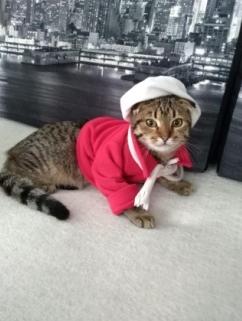 Кошка-Кассандра