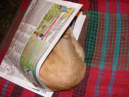 Кошка Гося
