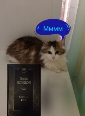 Кошка Маруська.