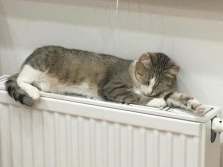 Кошка Муся