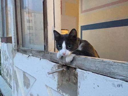 Кошка Пиня