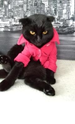 Кошка-Эсмеральда