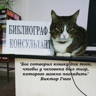 Кошка Маша