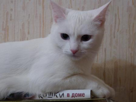 Кошка Фаня