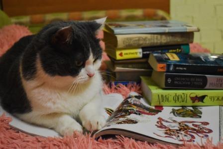 Кот Тимофей.