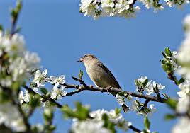Птица на фоне голубого неба.