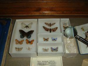 Бабочки из коллекции В. В. Набокова