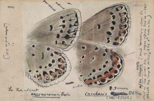 Рисунок крыльев бабочек известного писателя