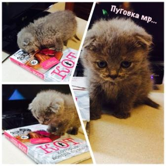 Кошка Пуговка.