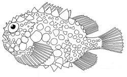 """Изображение рыбы """"Колючий круглопер Шмидта"""""""