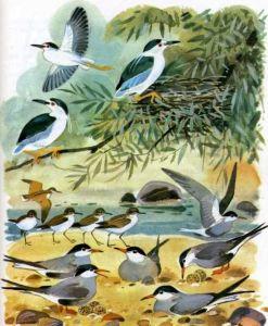 птицы клюют зернышки