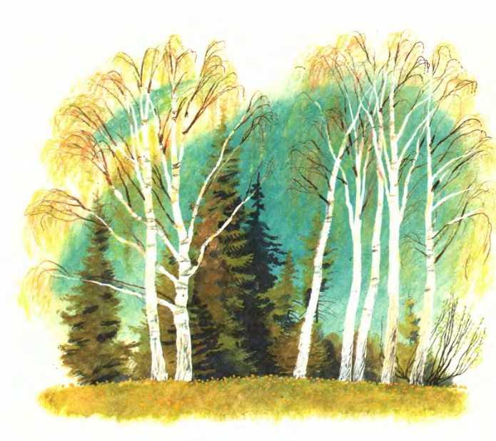 Рисунок деревьев