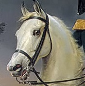 Картинка головы лошади