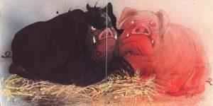 черная и красная свиньи