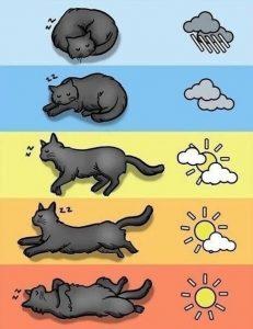Народные приметы. Определение погоды по положению и позе кошки