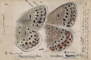 Рисунок В. В. Набокова