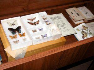 Коллекция бабочек, собранных Набоковым  в США