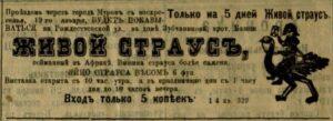 Живой страус // Муромский край. - 1914. - 23 января