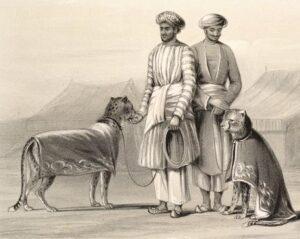Пижама. Мужчины в белых пижамах с охотничьими гепардами. Индия, 1844