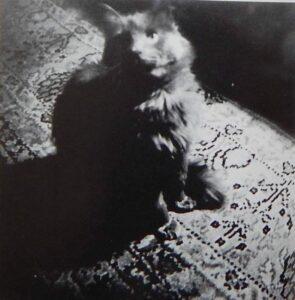 Пасик. Фото Иосифа Бродского