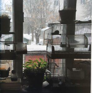Птицы в мастерской Валерия Кокурина