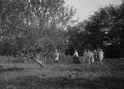 Лев Николаевич Толстой на прогулке по яблоневому саду со своими родными